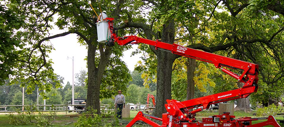 Tree-Service-Bottom-Image-1-2018