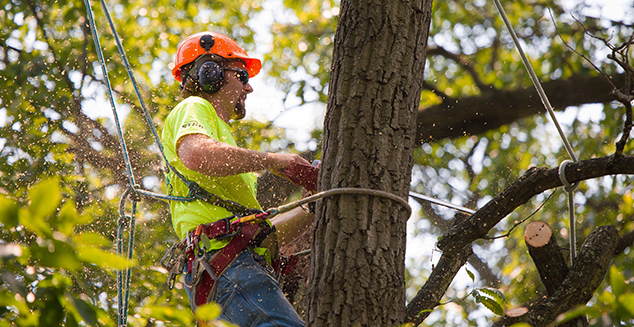 Jeff's Tree & Outdoor Services - Tree Removal & Trimming