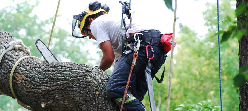 Tree-Service-Bottom-Image-2-2018