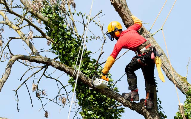 Tree-Service-Second-2-2018